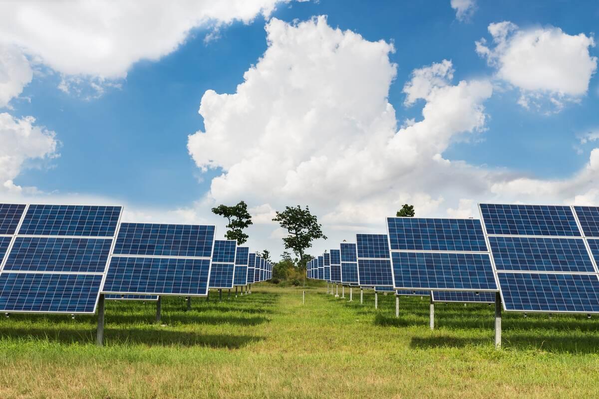 Solar Farm Up Close